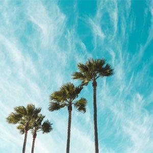 congreso para videografos VideoSUMMIT 6 - clima tropical